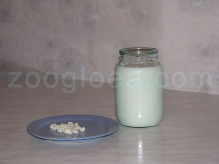 Milk and The Tibetan milk mushroom